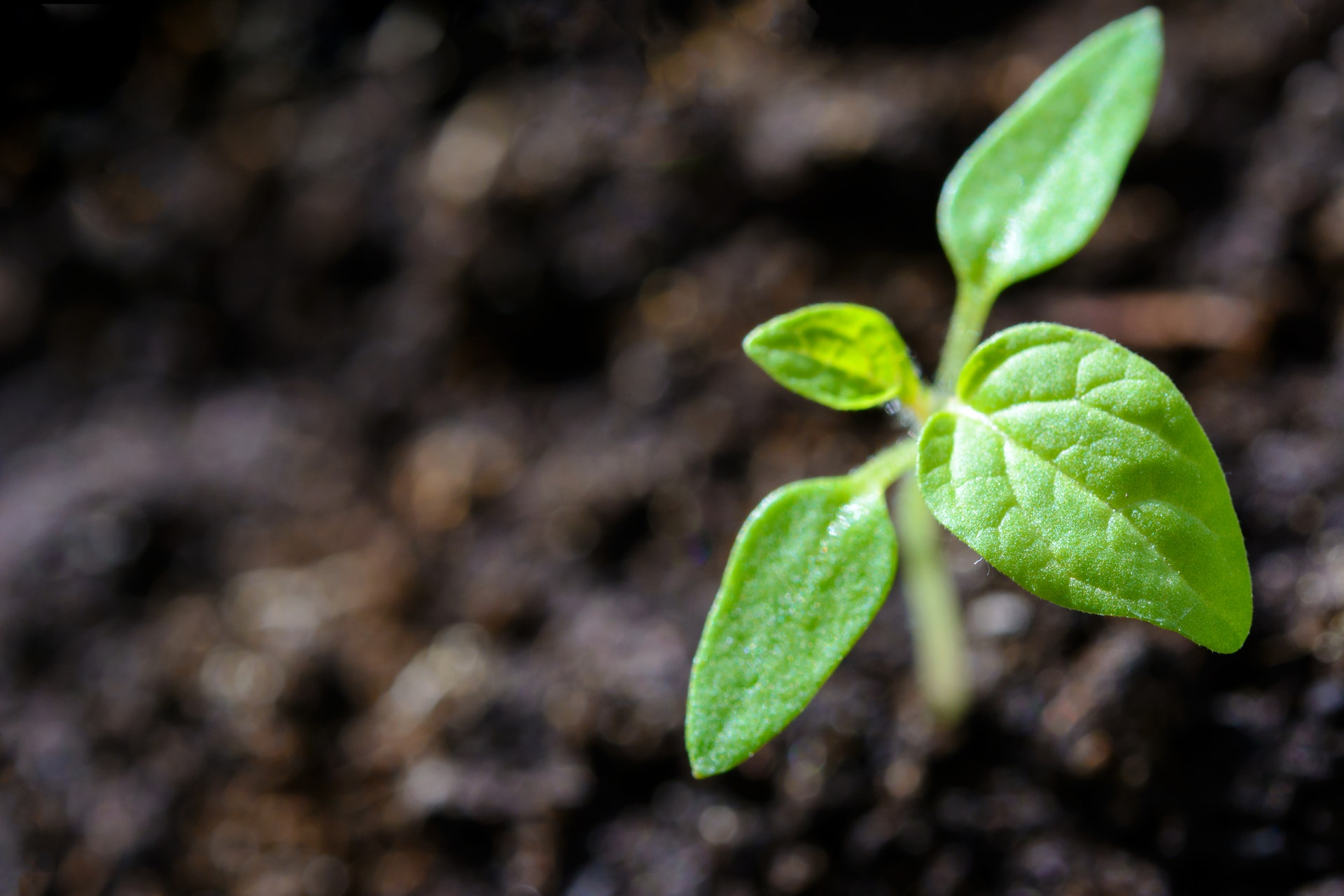 Your planned gift is like planting a seed that grows into a tree.